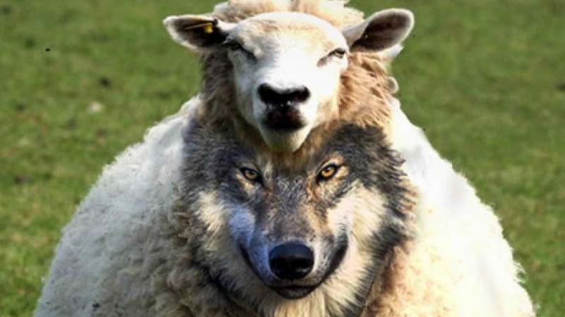 Avoiding false prophets, doing good works - District of the USA